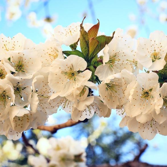 Tempo di fioritura...