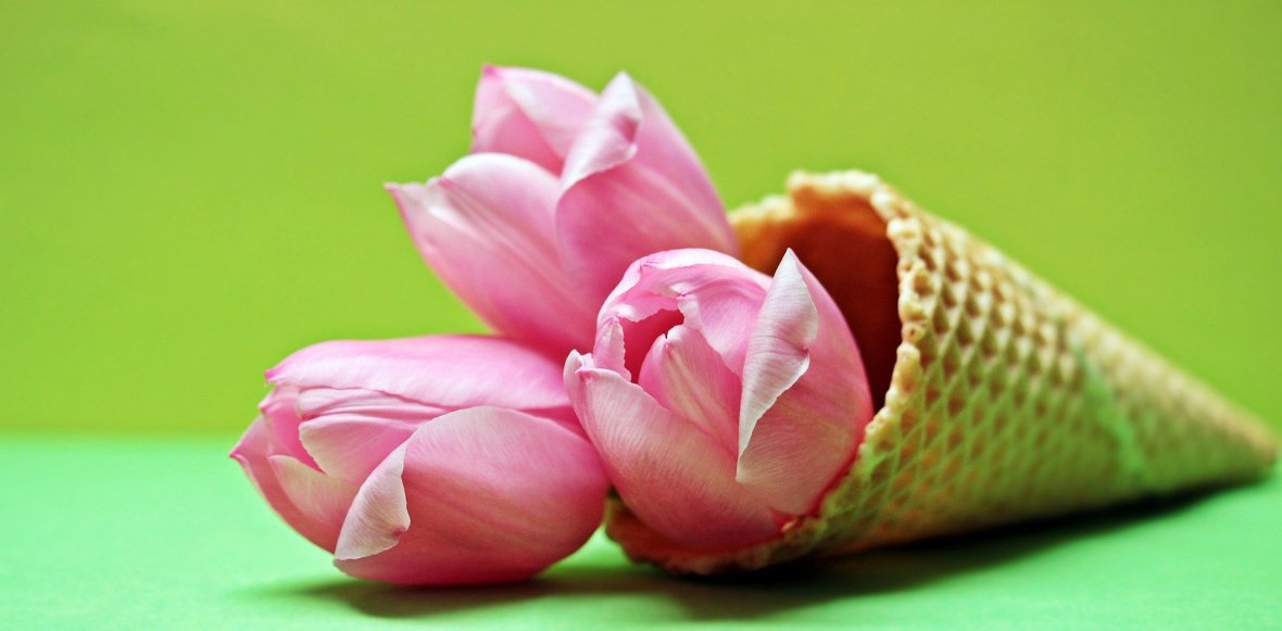 tulips-2148706_1920
